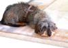 Haustierbetreuung von der Steuer absetzen